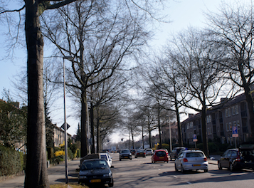 bomeninventarisatie bussum - WBG Advies