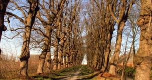 Quickscan Flora- en Faunawet - WBG Advies