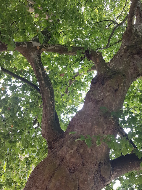 Nader bomenonderzoek WBG Advies